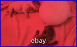 4 Station Infant Puppy Feeder Nursing Nurser Station