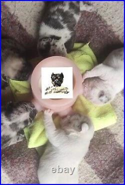 5 Station Infant Puppy Milk Feeder Nursing Nurser Station