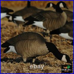 Avery Greenhead Gear Ghg Tim Newbold Ffd Lesser Canada Goose Feeder Decoys & Bag