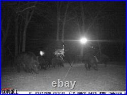 Harvest Time FEEDER LIGHT! Solar, Motion Activated, AmberGlow Hog Light HUNTER